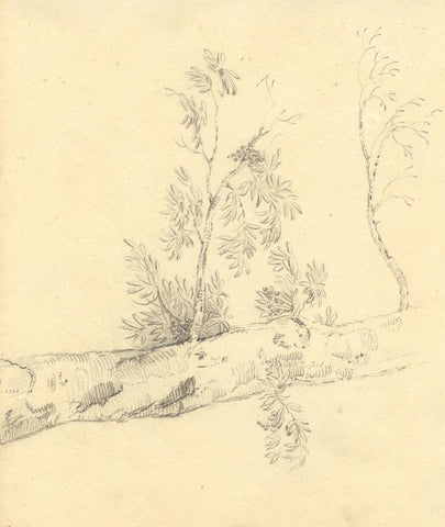 Anna Knowles, Tree & Figure Studies-Original early 19th-century graphite drawing