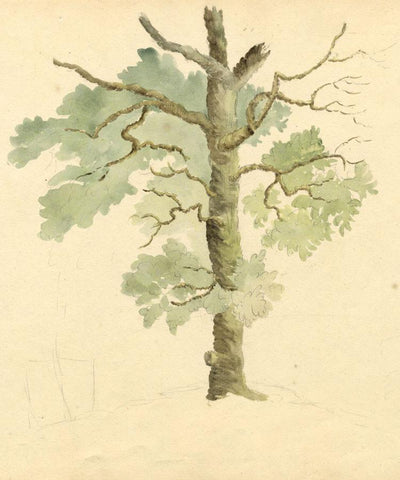 Anna Knowles, Tree & Branch Studies - Early 19th-century watercolour painting