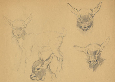 John Murray Thomson RSA, Kid Goat Heads - Mid-20th-century graphite drawing