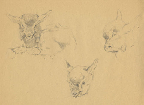 John Murray Thomson RSA, Kid Goat Studies - Mid-20th-century graphite drawing