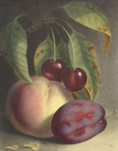 Peach & Cherry Fruit Still Life-Original mid-19th-century overpainted lithograph