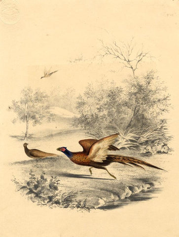 Two Pheasants in a Wood - Original early 19th-century overpainted lithograph