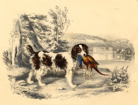 Spaniel Dog Hunting Pheasant -Original early 19th-century overpainted lithograph