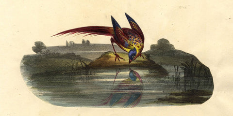 Pheasant by the Water's Edge -Original early 19th-century overpainted lithograph