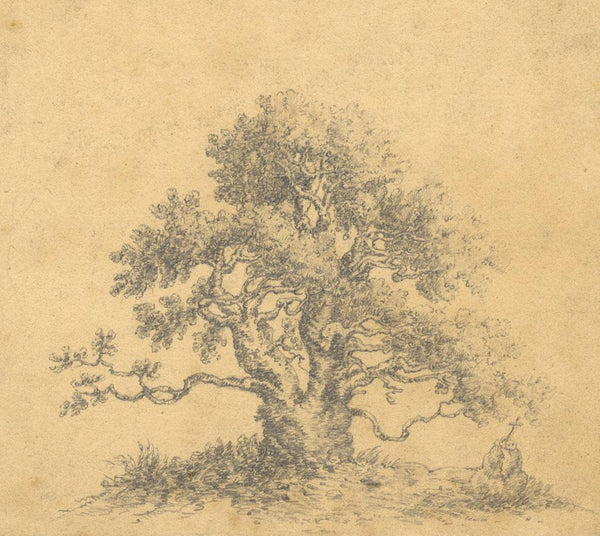 Ancient Baobab Tree, St Jago - Original mid-19th-century graphite drawing