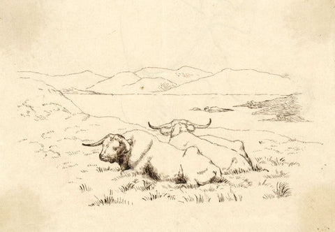 Albert A. Harcourt, Resting Oxen - Original late 19th-century pen & ink drawing