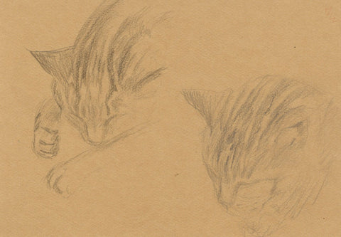 Sleeping Cat Head Details - Original early 20th-century graphite drawing