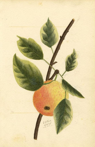 E.D. Rice, Apple Fruit Branch & Poem, Two Sheets - 1875 watercolour painting