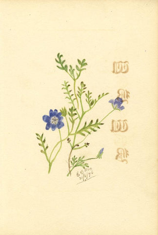 E.D. Rice , Baby Blue Eyes Flowers & Poem, Two Sheets -1876 watercolour painting