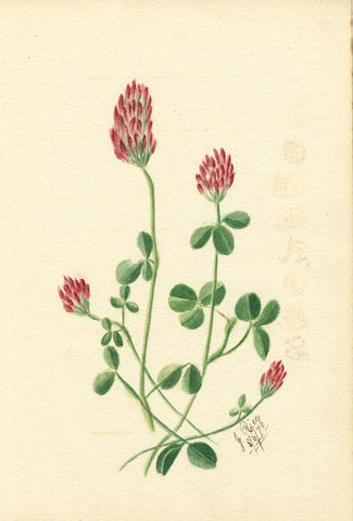 J. Rice, Clover Flowers & Poem, Two Sheets - Original 1876 watercolour painting