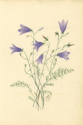 J. Rice, Harebell Flowers & Poem, Two Sheets -Original 1875 watercolour painting