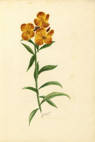 E. Rice, Orange Wallflowers & Poem, Two Sheets - 1876 watercolour painting