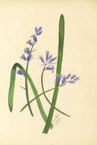 E.D. Rice, Hyacinth Flowers & Poem, Two Sheets - 1876 watercolour painting