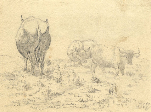 Horned Cows Grazing - Original early 19th-century graphite drawing