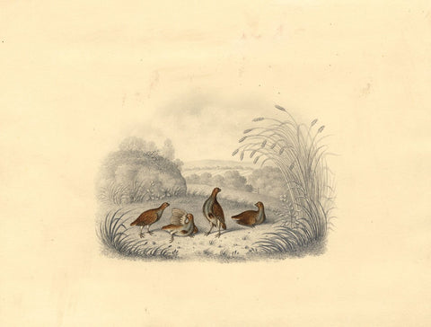 B.F., Partridge Birds in a Rural Landscape - 1808 graphite & watercolour drawing