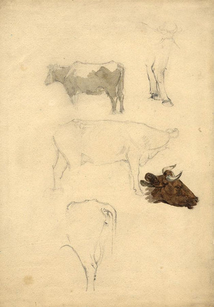 Attrib. Peter De Wint OWS, Studies of Cows - early 19th-century watercolour
