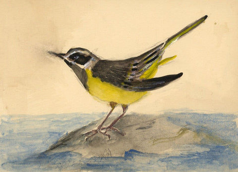 Ellen M. Murray Thomson Grey Wagtail Bird -Mid-20th-century watercolour painting