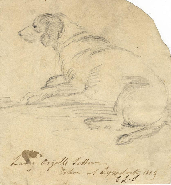 Charles Loraine-Smith, Lady Asgill's Setter Dog - Original 1809 graphite drawing