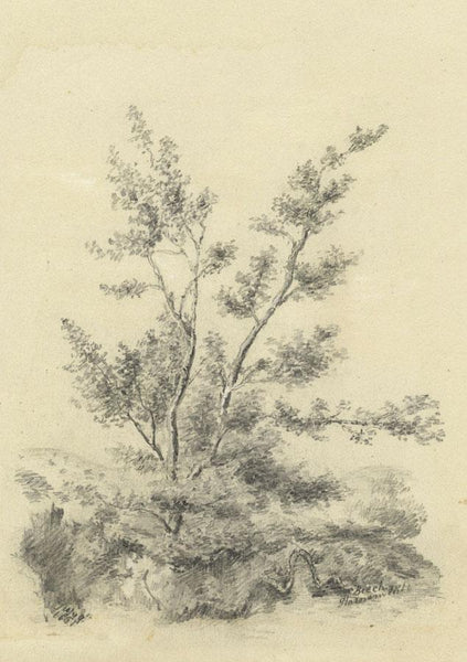 Adeline Frances Mary Dart, Beech, Harnham Hill, Salisbury -1861 graphite drawing
