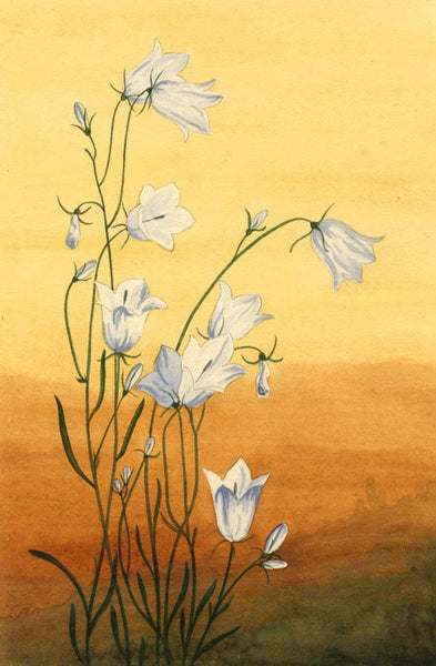 Allan Furniss, Harebell Flowers, Scotland - Original 1940s watercolour painting
