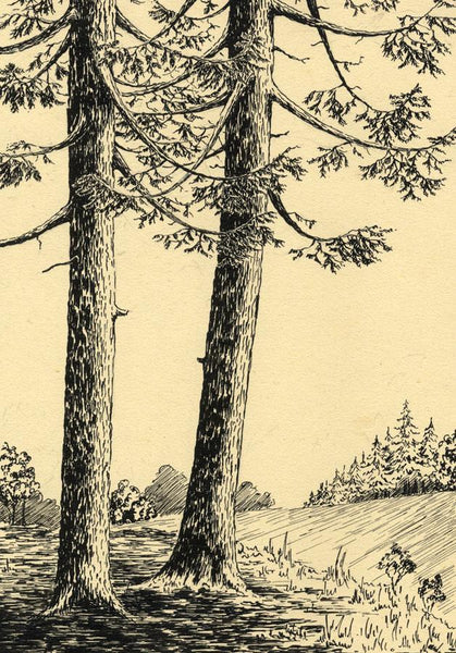 Allan Furniss, Spruce Fir Trees, Paddockhole - Original 1940s pen & ink drawing
