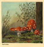 Allan Furniss, Red Woodland Toadstools, Scotland - 1940s watercolour painting
