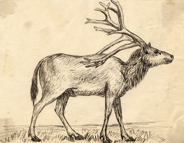 Albert A. Harcourt, Stag Deer Study - Original 19th-century pen & ink drawing