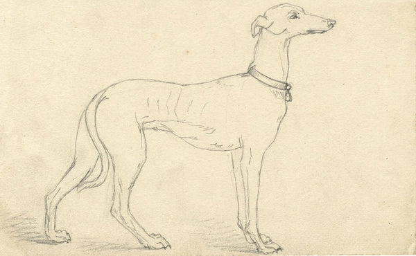 Albert A. Harcourt, Greyhound Dog Study - Original 19th-century graphite drawing