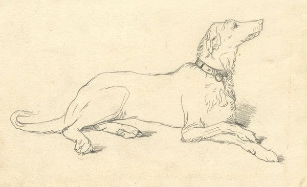 Albert A. Harcourt, Pointer Dog Study - Original 19th-century graphite drawing