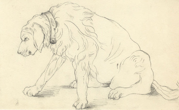 Albert A. Harcourt, Irish Wolfhound Dog  - late 19th-century graphite drawing