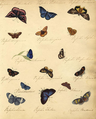 Thwaites, Sheet of Butterfly Studies - Original 1814 watercolour painting