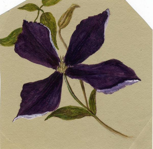Adelaide L. Haslegrave, Clematis Flower, Tunbridge Wells - 1881 watercolour