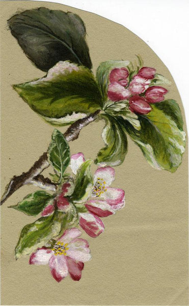 Adelaide L. Haslegrave, Apple Blossom, Tunbridge Wells - 1881 watercolour