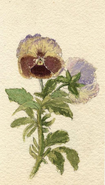Adelaide L. Haslegrave, Pansy Flower - 1880s watercolour painting