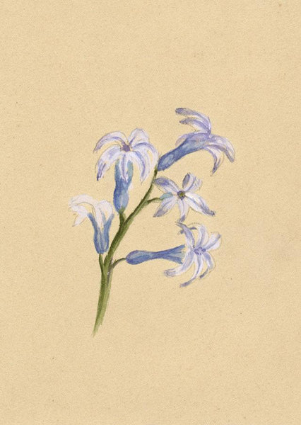 Adelaide L. Haslegrave, Glory of the Snow Flowers - 1880s watercolour painting