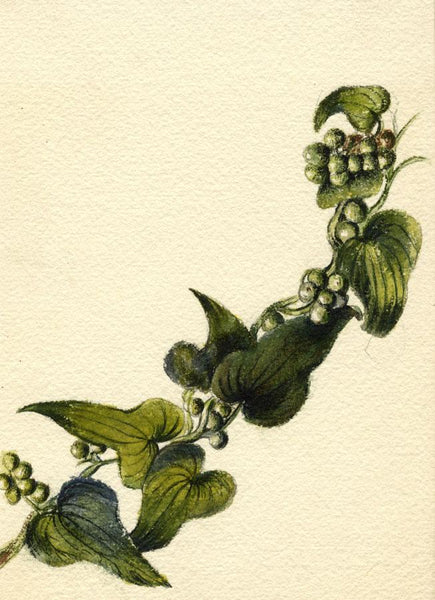Adelaide L. Haslegrave, Ivy Leaves & Berries - 1880s watercolour painting