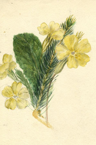 Adelaide L. Haslegrave, Primrose Flower - 1880 watercolour painting