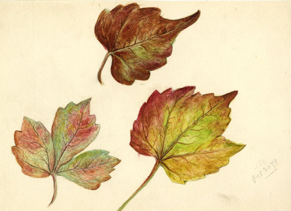 Adelaide L. Haslegrave, Autumn Leaf Study - 1879 watercolour painting