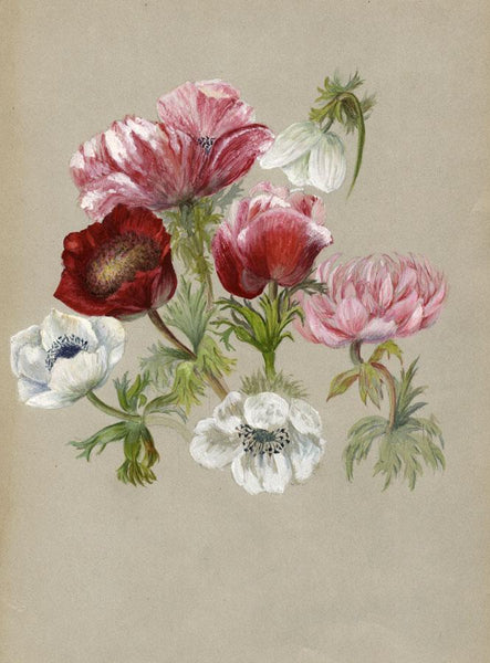 Adelaide L. Haslegrave, Anemone Flowers - 1880s watercolour painting