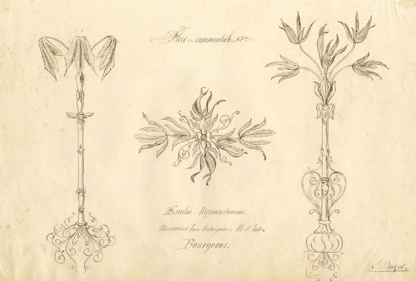 L. Denizot, French Floral Ornament Design with Horse Chestnut -1880s ink drawing