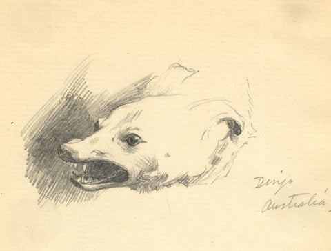Kenneth E. Wootton, Australian Dingo Dog Study -Original c.1911 graphite drawing