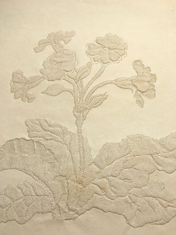 Original early 19th-century Pin-Prick Picture - Primrose Flower