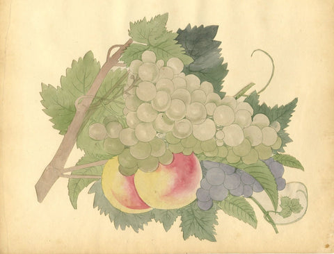 Grapes on the Vine with Peaches - 19th-century etching & watercolour painting