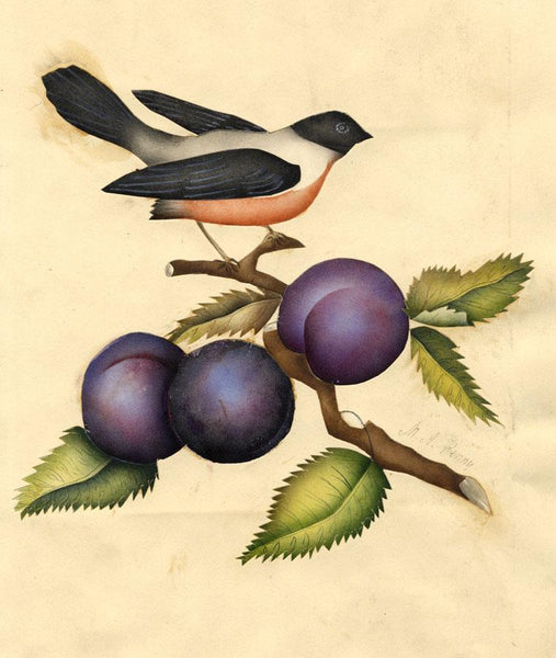 M.A. Penny, Bird on Branch with Plums - 19th-century watercolour painting