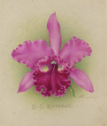 Alphonse Goossens, B.C. Rusthall Orchid Flower - 1931 watercolour painting