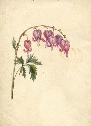 Bleeding Heart Flowers - Original early 19th-century watercolour painting