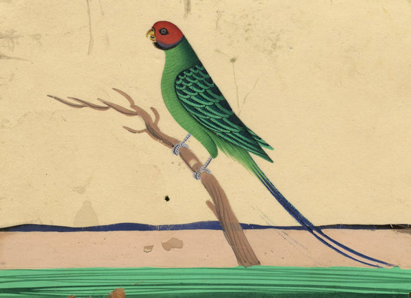 Company School 19th-century Indian Mica Painting in Gouache - Parakeet Bird