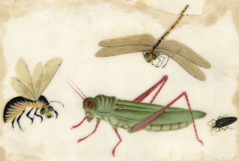 Antique 19th-century Chinese Pith Painting, Grasshopper Dragonfly & Wasp Insects