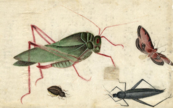 Antique 19th-century Chinese Pith Painting, Grasshopper, Cricket & Moth Insects