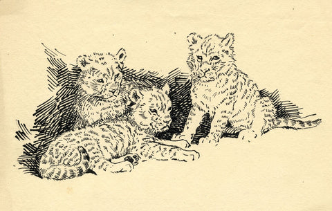 John Murray Thomson RSA, Lion Cubs  -Original mid-20th-century pen & ink drawing